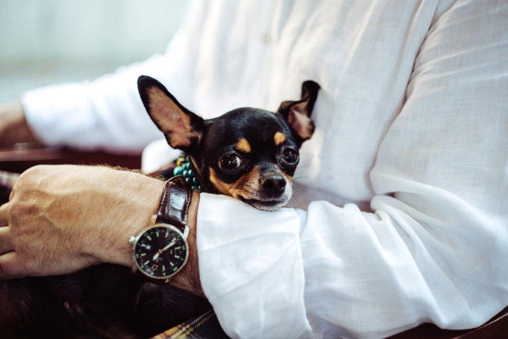 entrepreneur-and-dog